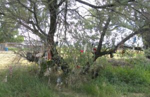 Prayer tree with ribbons and dreamcatchers tied onto the tree.